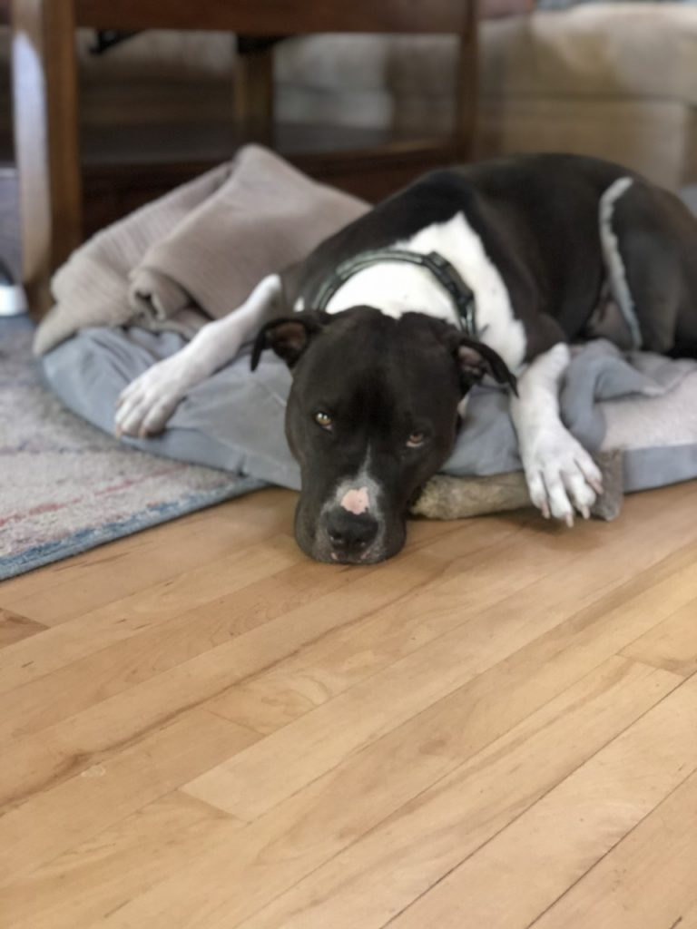 Beau the dog