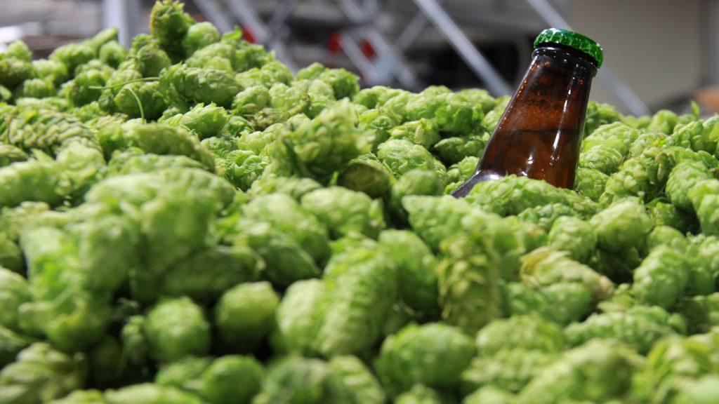 Bottle in a bunch of hops