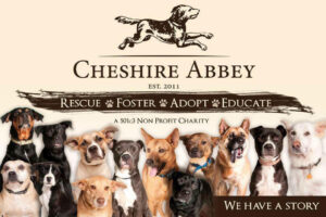 Cheshire Abbey Est 2011 Rescue Foster Adopt Educate. We have a story